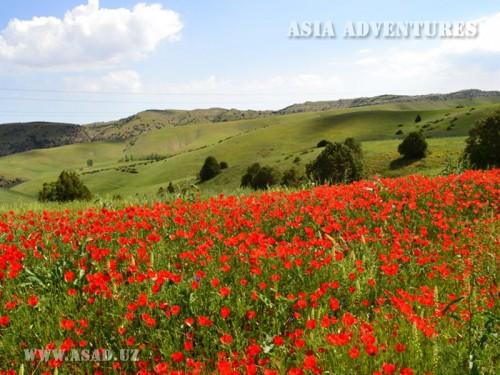 Вертолетный тур Горные цветы Узбекистана