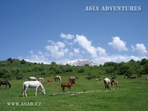 Вертолетный тур На лошадях к таинственному плато Пулатхан